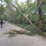 台風被害の模様